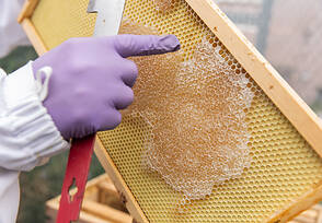Detail of a honeycomb screen with honey.