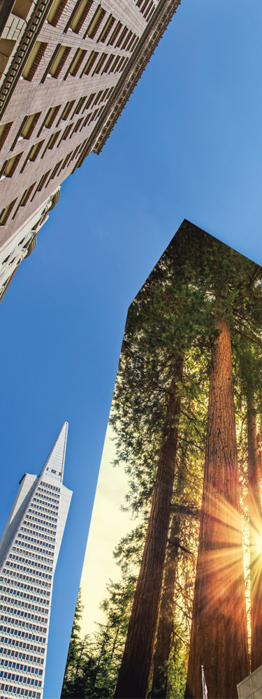 San Francisco skyline with image of redwoods