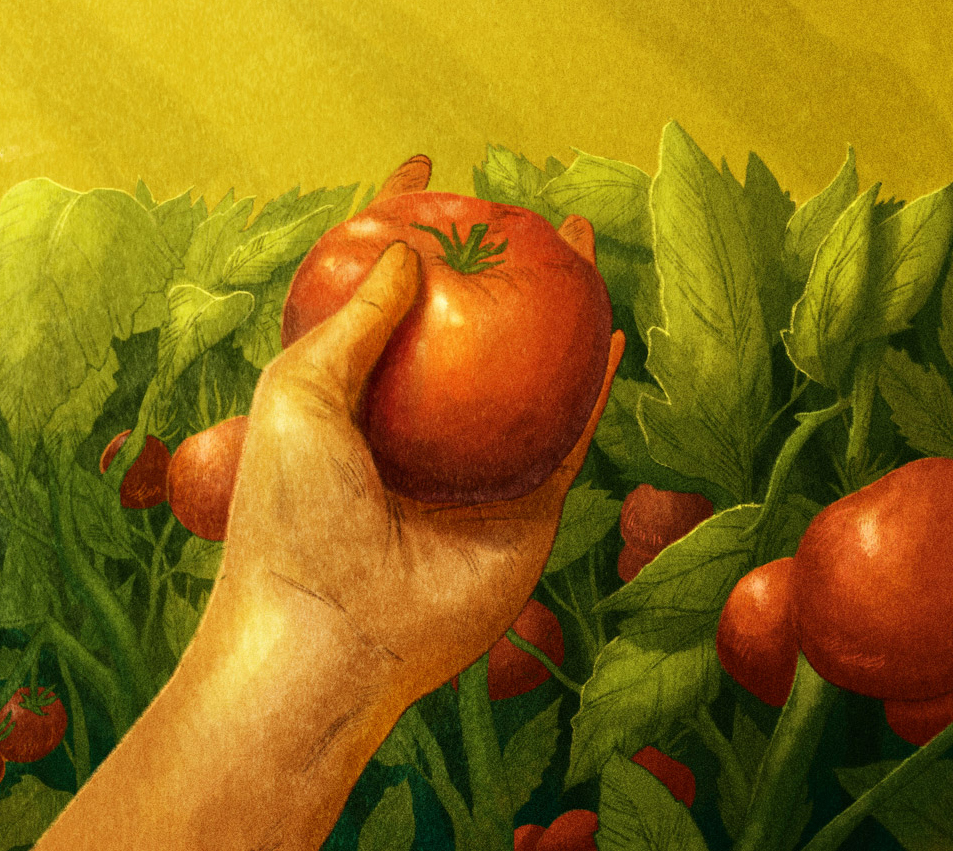Illustration of a hand holding a tomato
